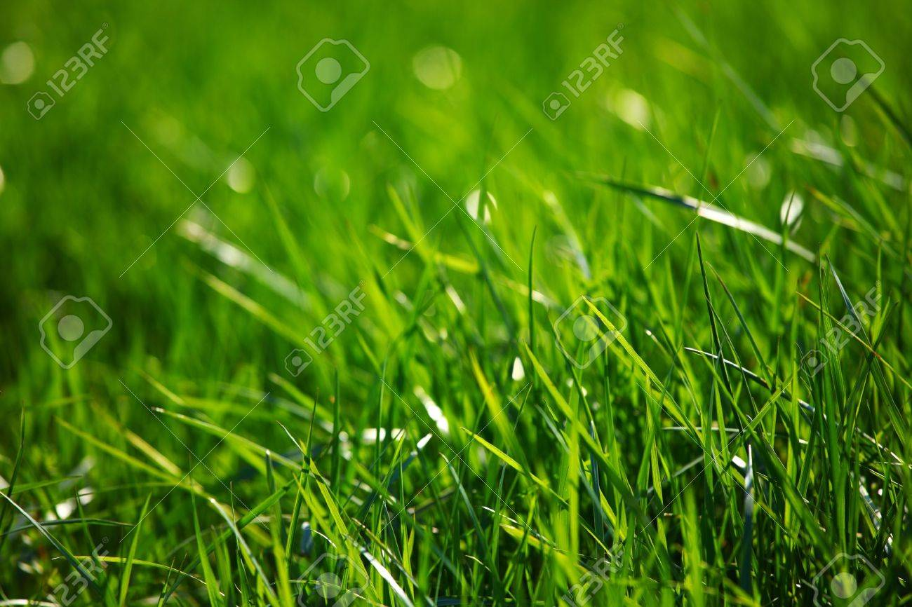green grass macro close up Stock Photo - 8743523