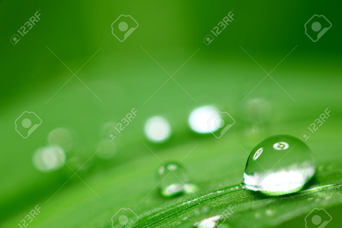 big water drop on grass blade Stock Photo - 8743434