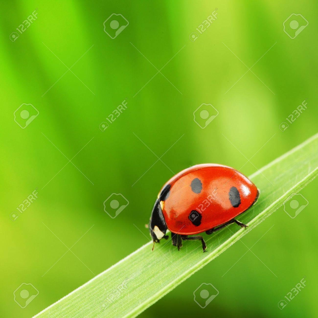 ladybug on grass nature background - 8743974