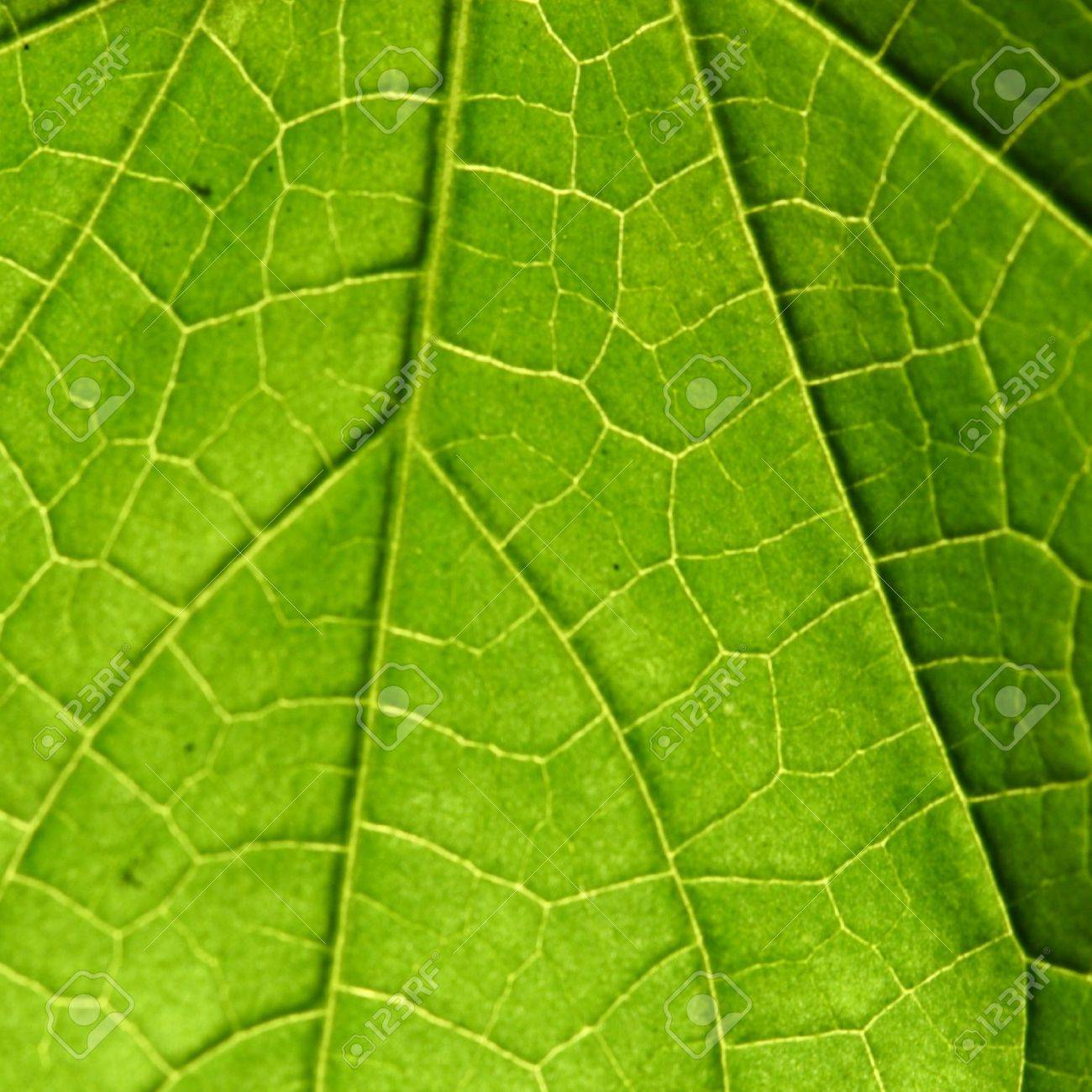 green leaf close up nature background Stock Photo - 8743970