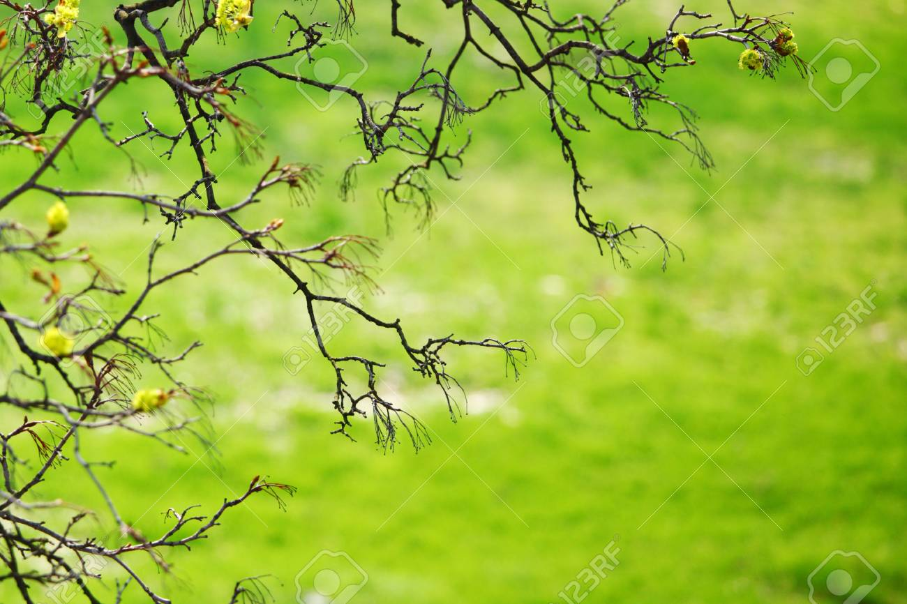 branches on a background of grass Stock Photo - 8745974