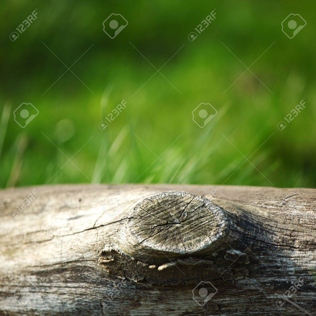 wood in grass nature background Stock Photo - 8819902