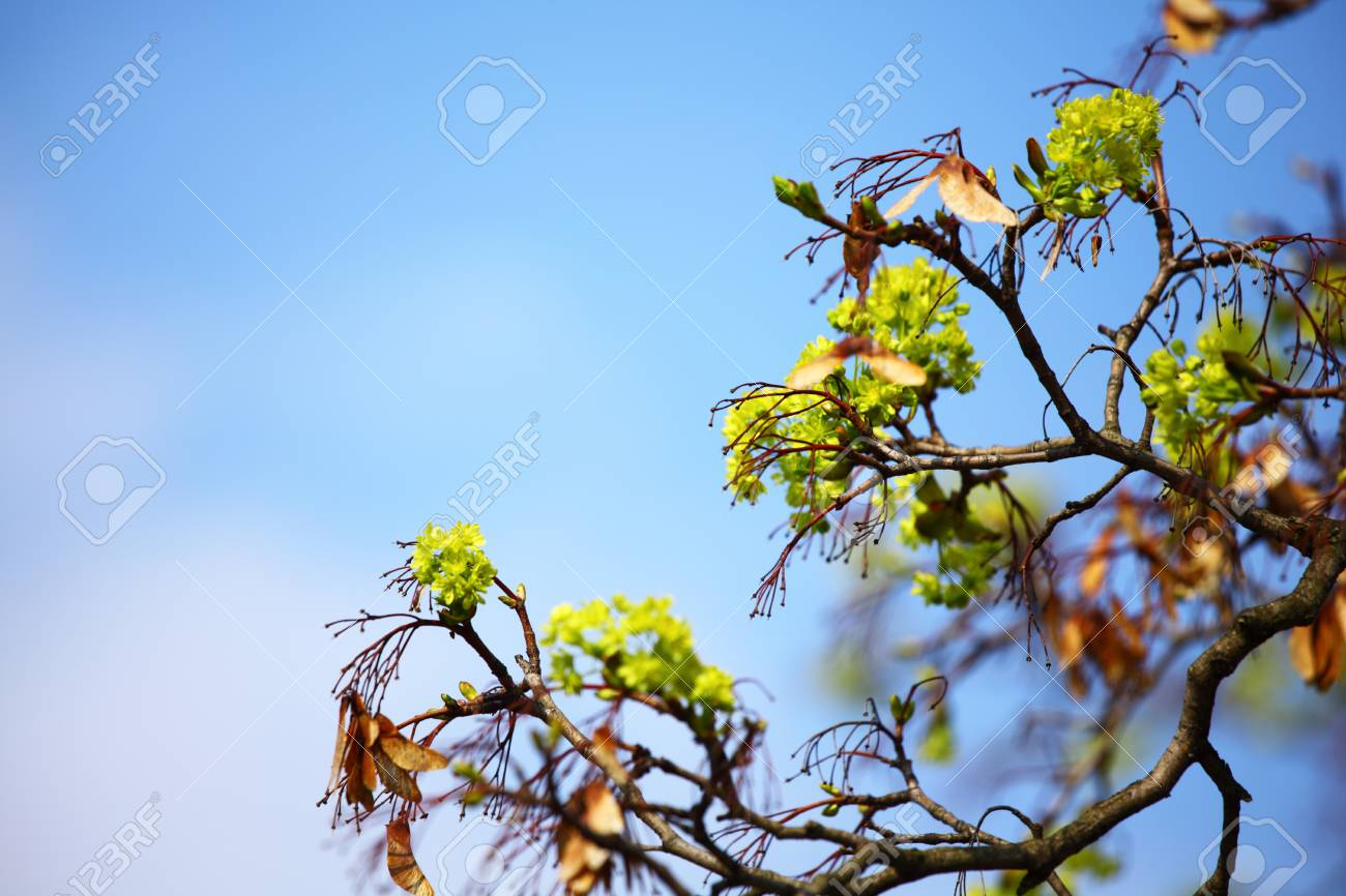 branches on a background of blue sky Stock Photo - 8820121