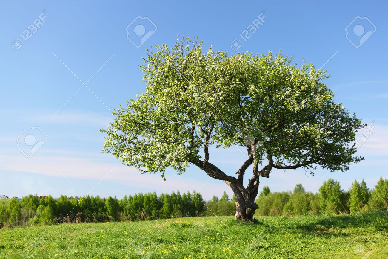 alone tree on green grass field Stock Photo - 9005632