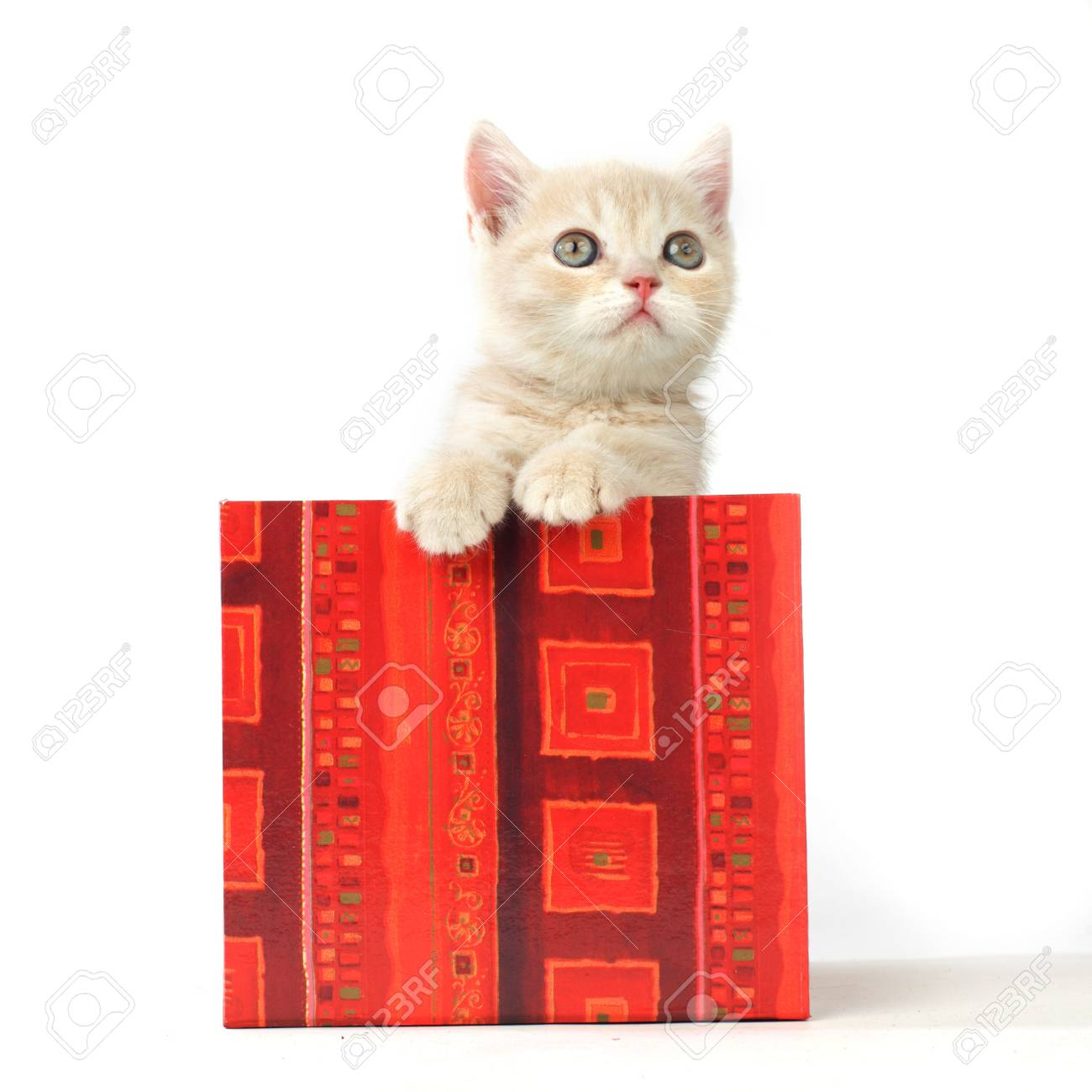 cat in gift box isolated on white background Stock Photo - 9174747