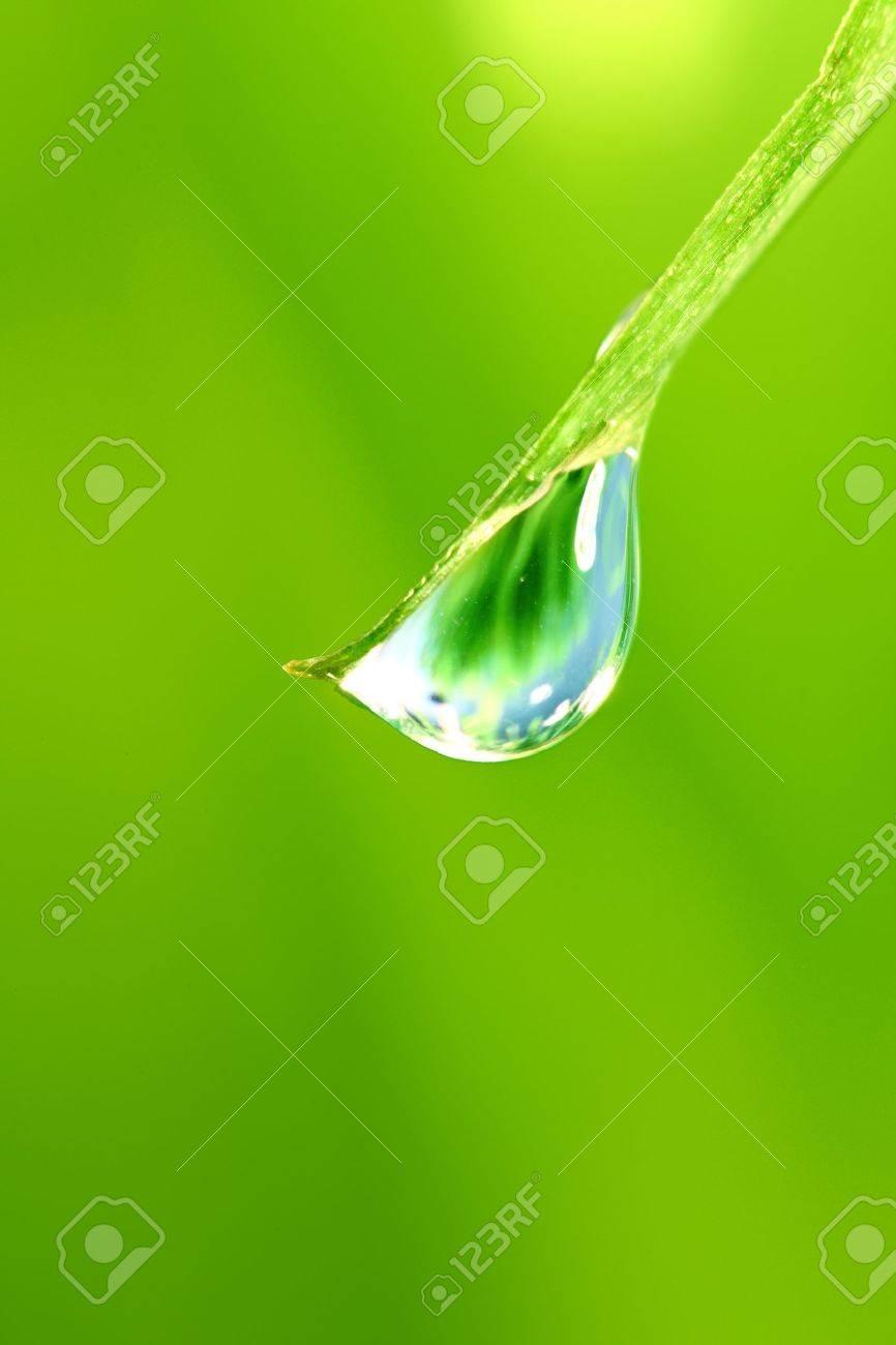 big water drop on grass blade Stock Photo - 9410040