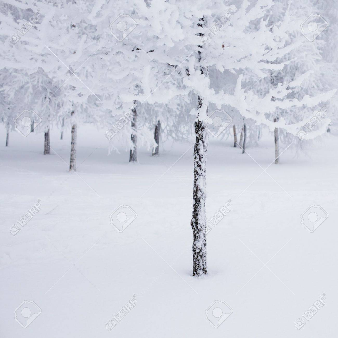 Snow Trees Background