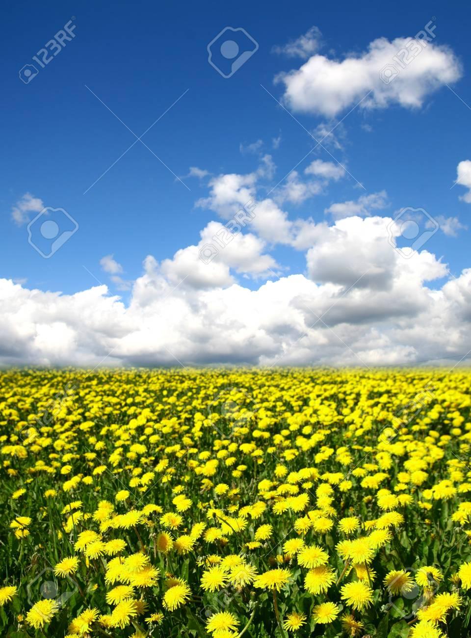 dandelion green field country landscape Stock Photo - 10459597
