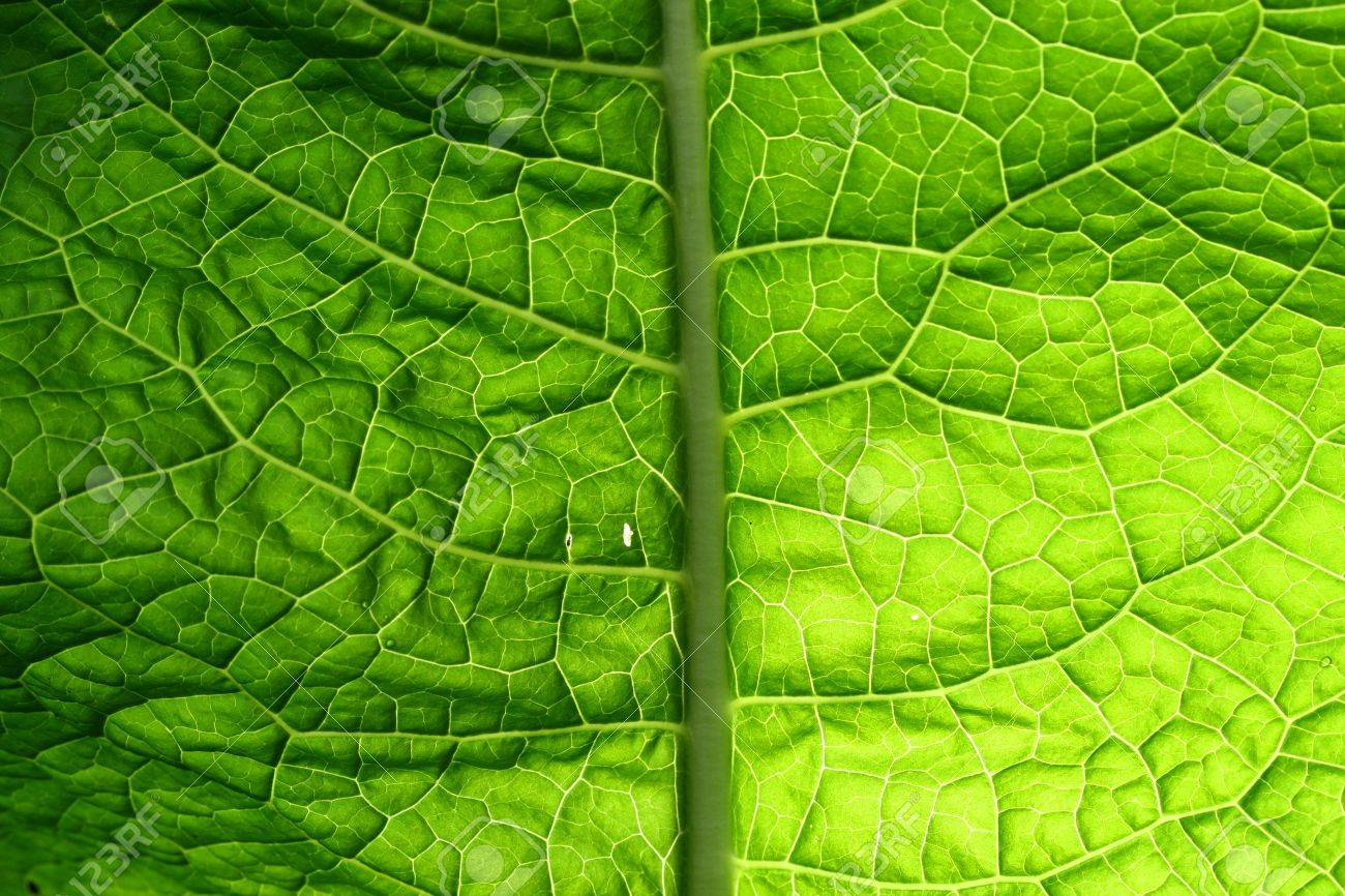 summer green leaf macro close up Stock Photo - 10504003