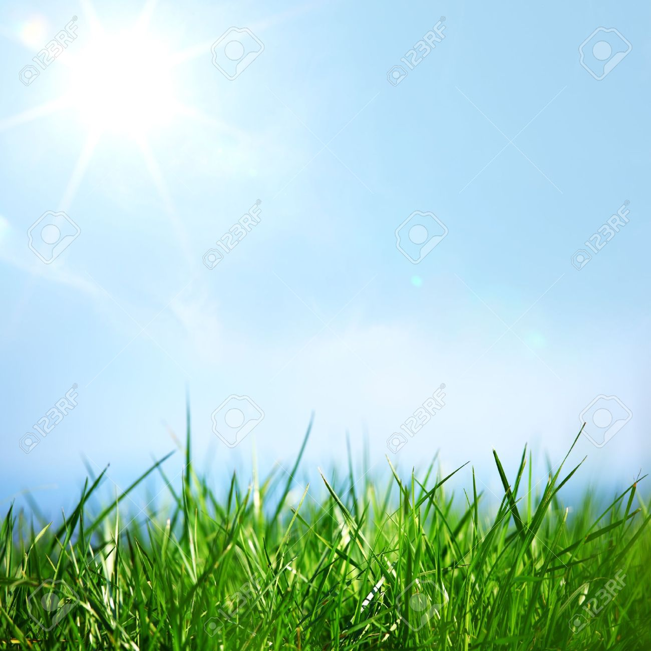 green grass under blue sky stock photo, picture and royalty free