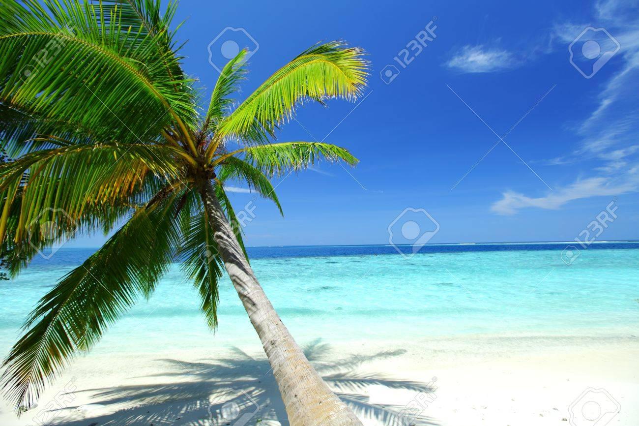 tropical island palm sea and sky Stock Photo - 11033122