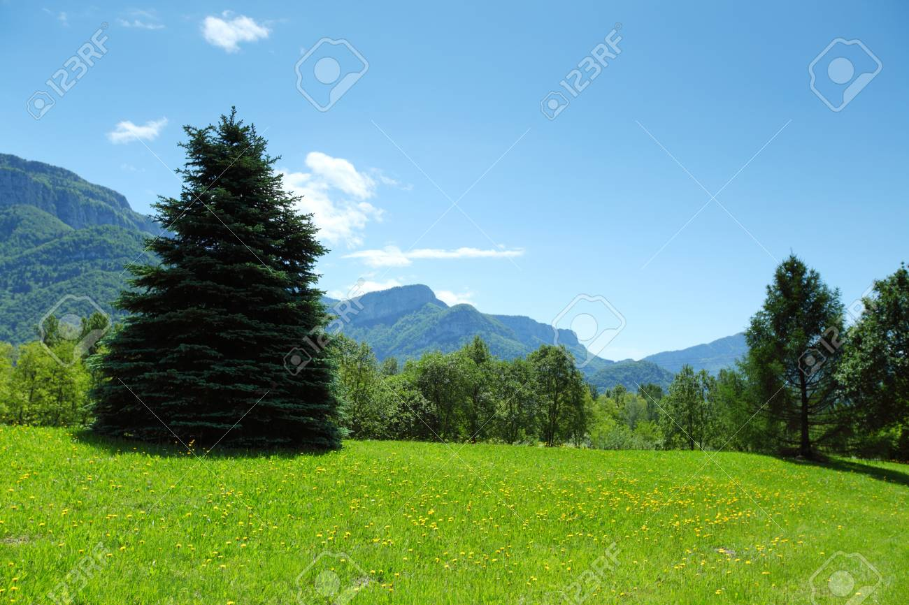 a beautiful view of the alps tree on grass field Stock Photo - 14685137