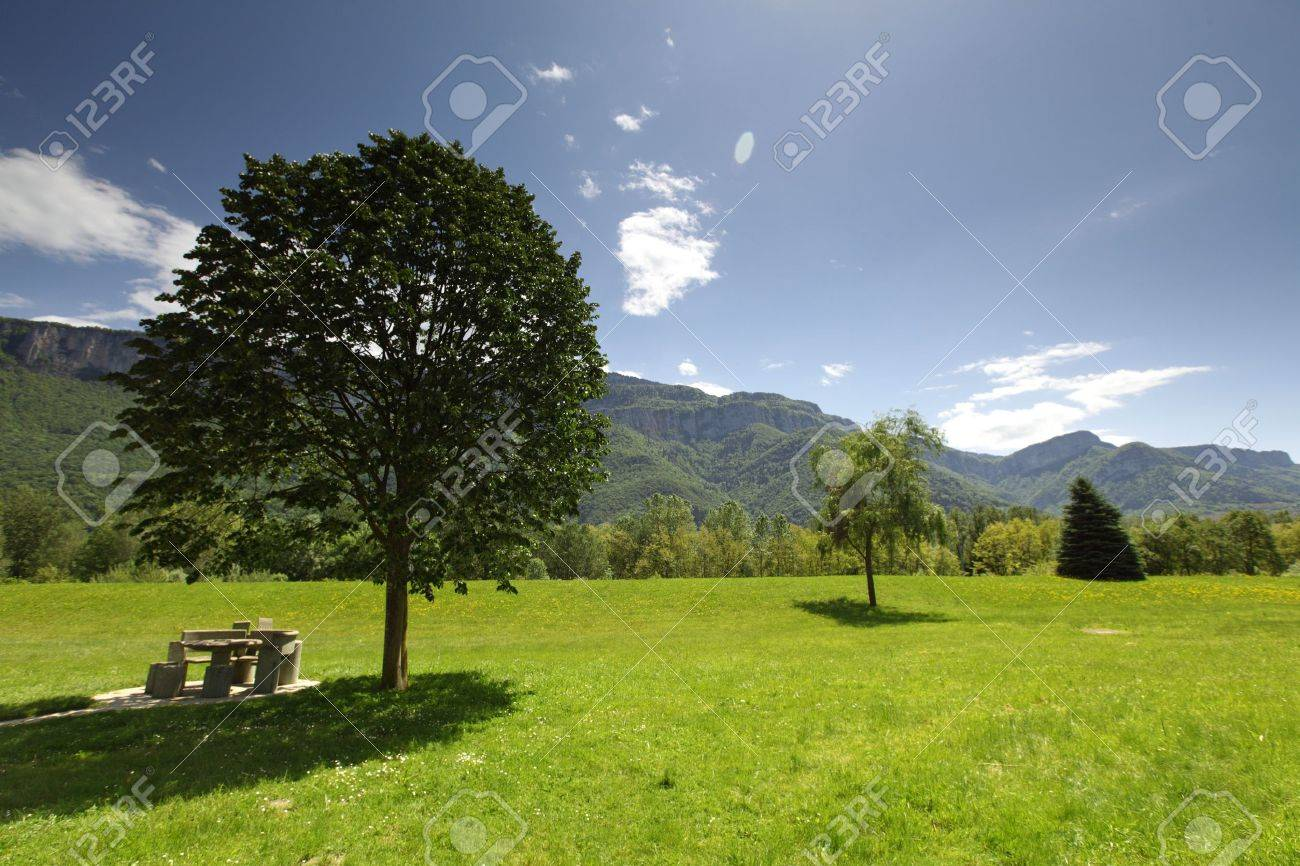 a beautiful view of the alps tree on grass field Stock Photo - 15872811