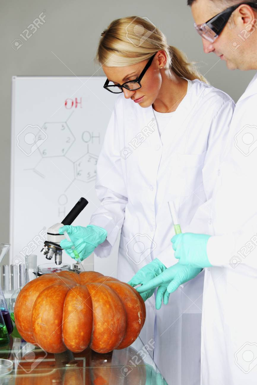 Scientist conducting genetic experiment with pumpkin Stock Photo - 22406916
