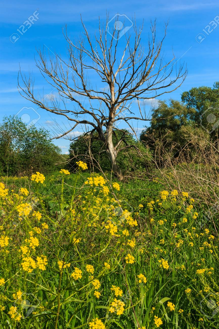 Dead Tree With Blue Sky And Grass And Flowers Landscape Stock Photo