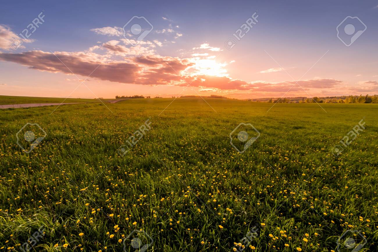 Sunrise or sunset on a field covered with young green grass and yellow flowering dandelions, a hill in the background and a cloudy sky with sunbeams cutting through the clouds. - 148271421
