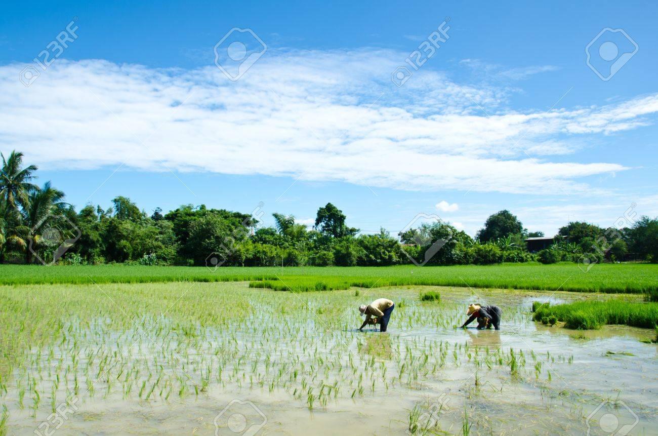 Farmers are farming. - 10486883