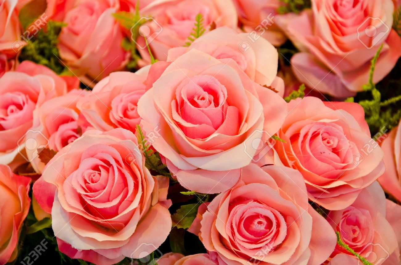 Pink roses mean love is beginning to grow on mind. Stock Photo - 12308305