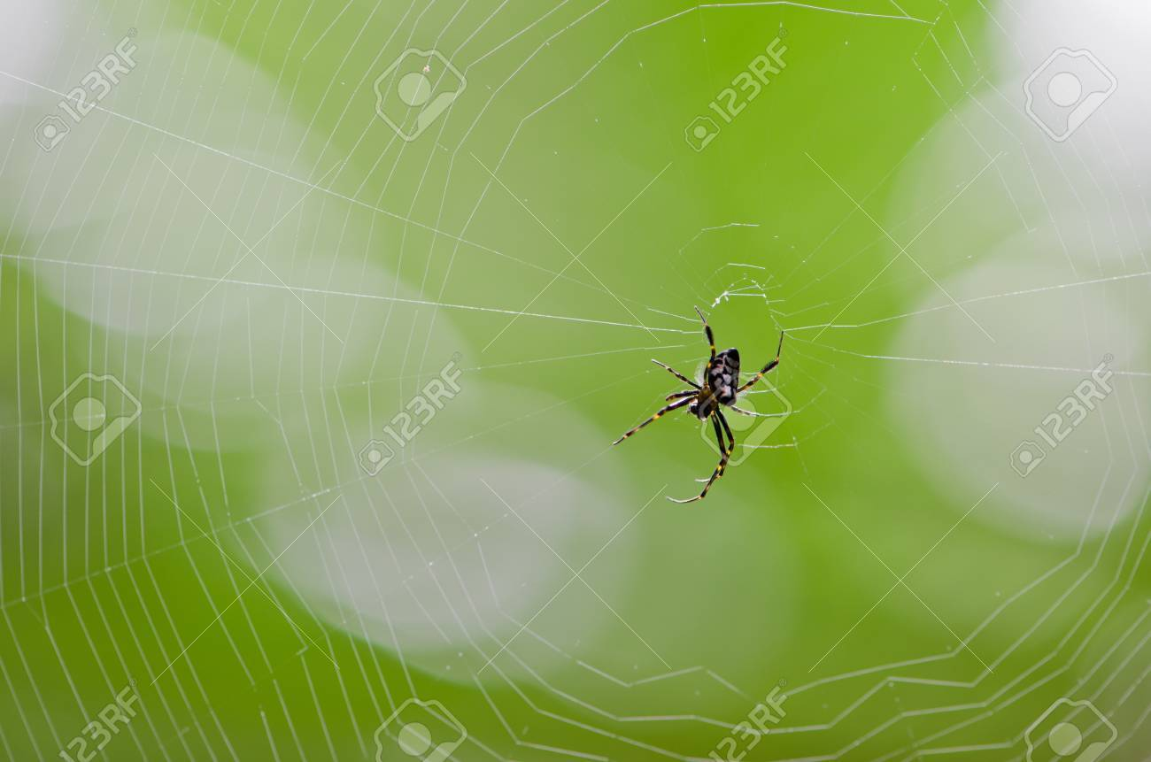 Spider webs in the tropical rain forest. - 15432794
