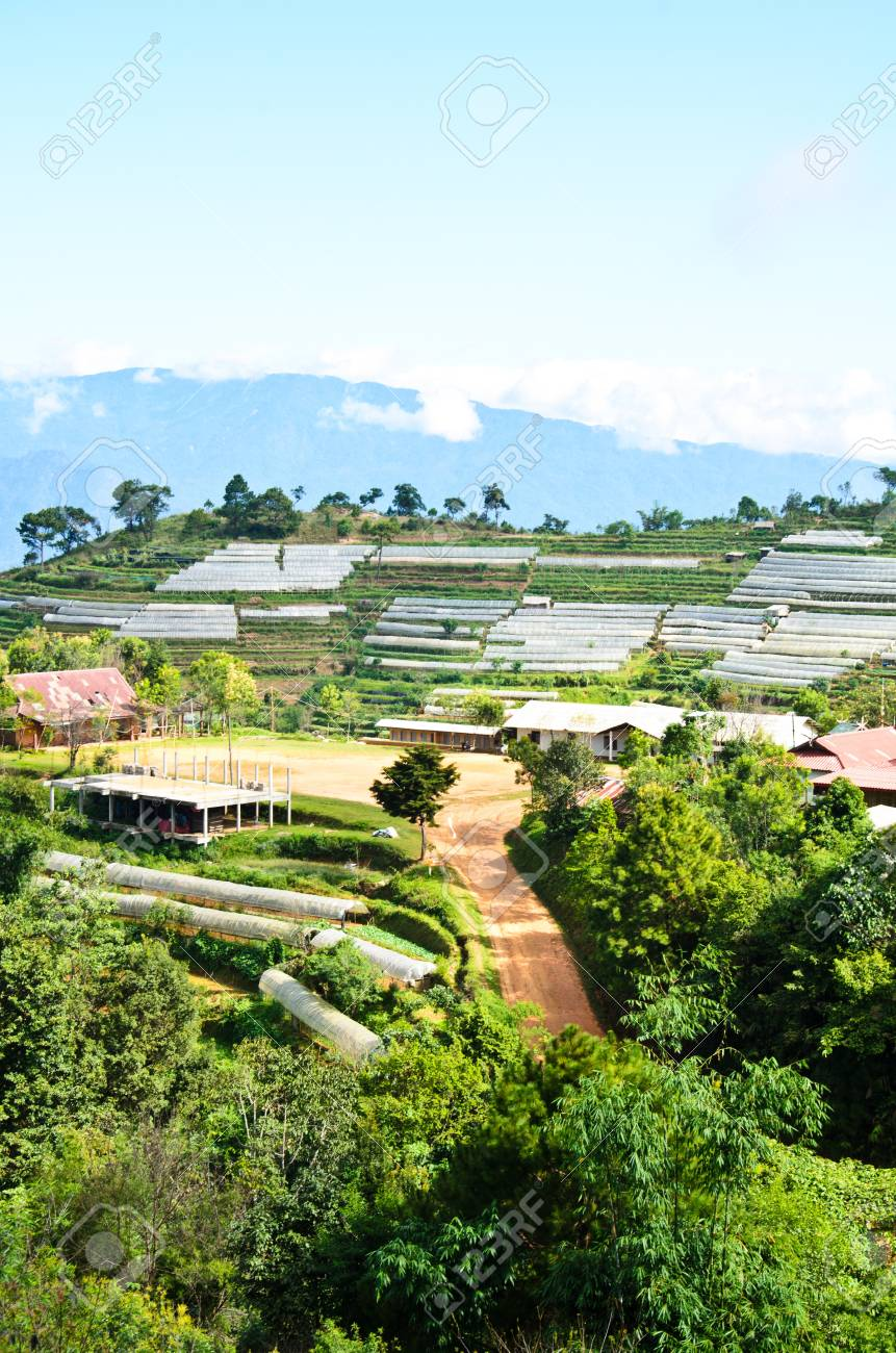 El Camino De Grava A La Planta Con Terraza En La Montaña Chiang Mai Tailandia