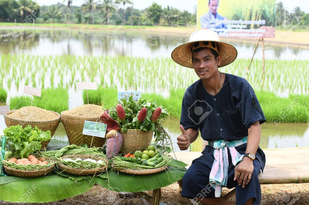 SINGBURI - THAILAND 18 : Farmers planting rice by demonstrating sufficient economy like Kings and Thailand show their loyalty to The monarchy at Bangrachan on October 18, 2016 in Singburi, Thailand. - 64637659