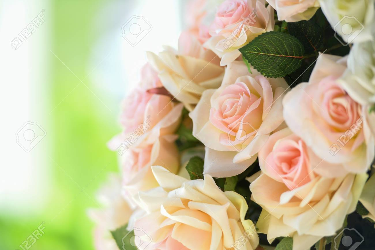 Pink Roses Mean Love Is Beginning To Grow On Mind Stock Photo