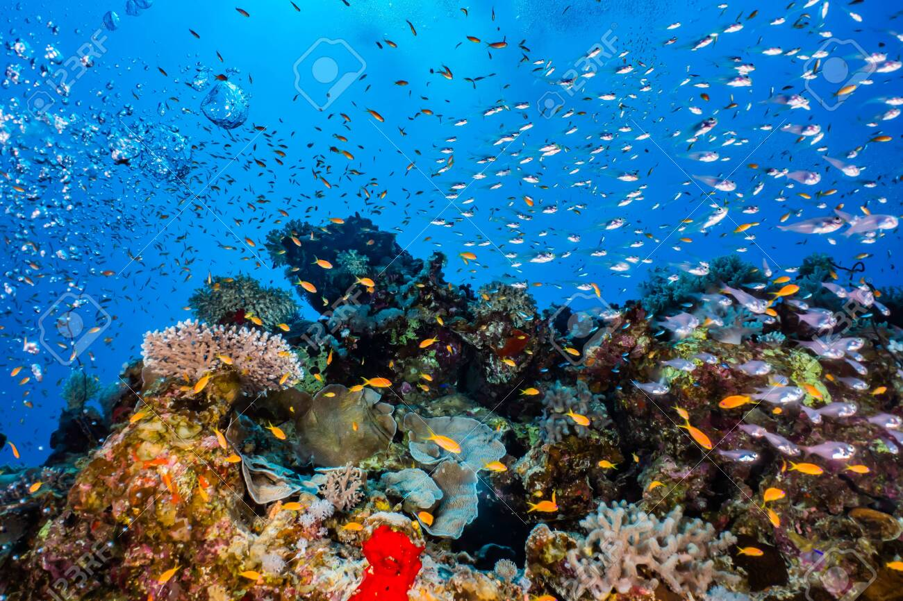 Coral reefs and water plants in the Red Sea, Eilat Israel - 138322000