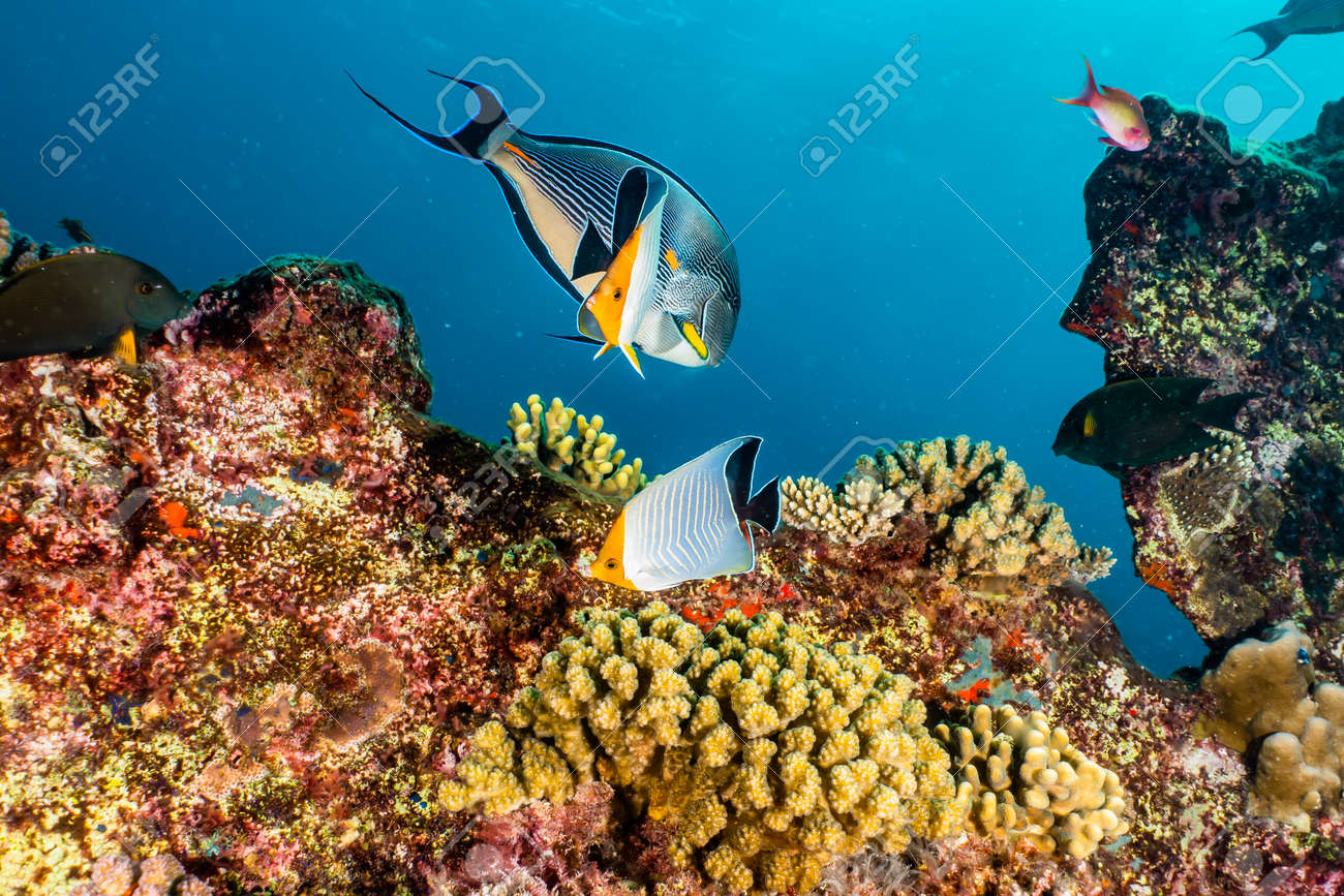 Coral reefs and water plants in the Red Sea, Eilat Israel - 140550147