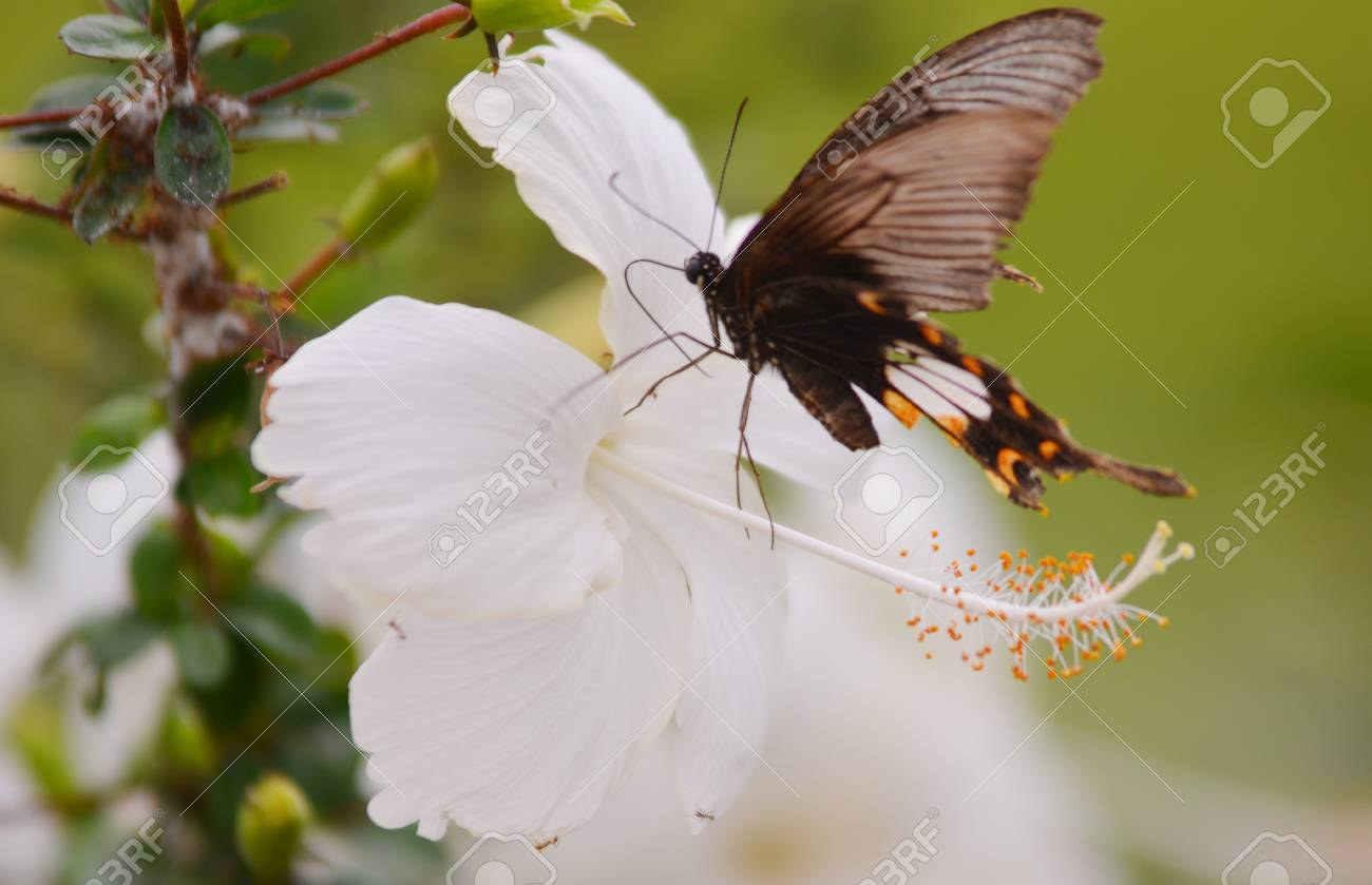 A beautiful orange butterfly resting on a white flower Stock Photo - 14585280