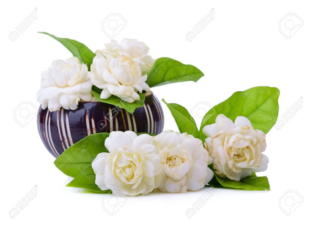 Jasmine flower fragrance isolated on white background stock photo jasmine flower fragrance isolated on white background stock photo 71620669 mightylinksfo