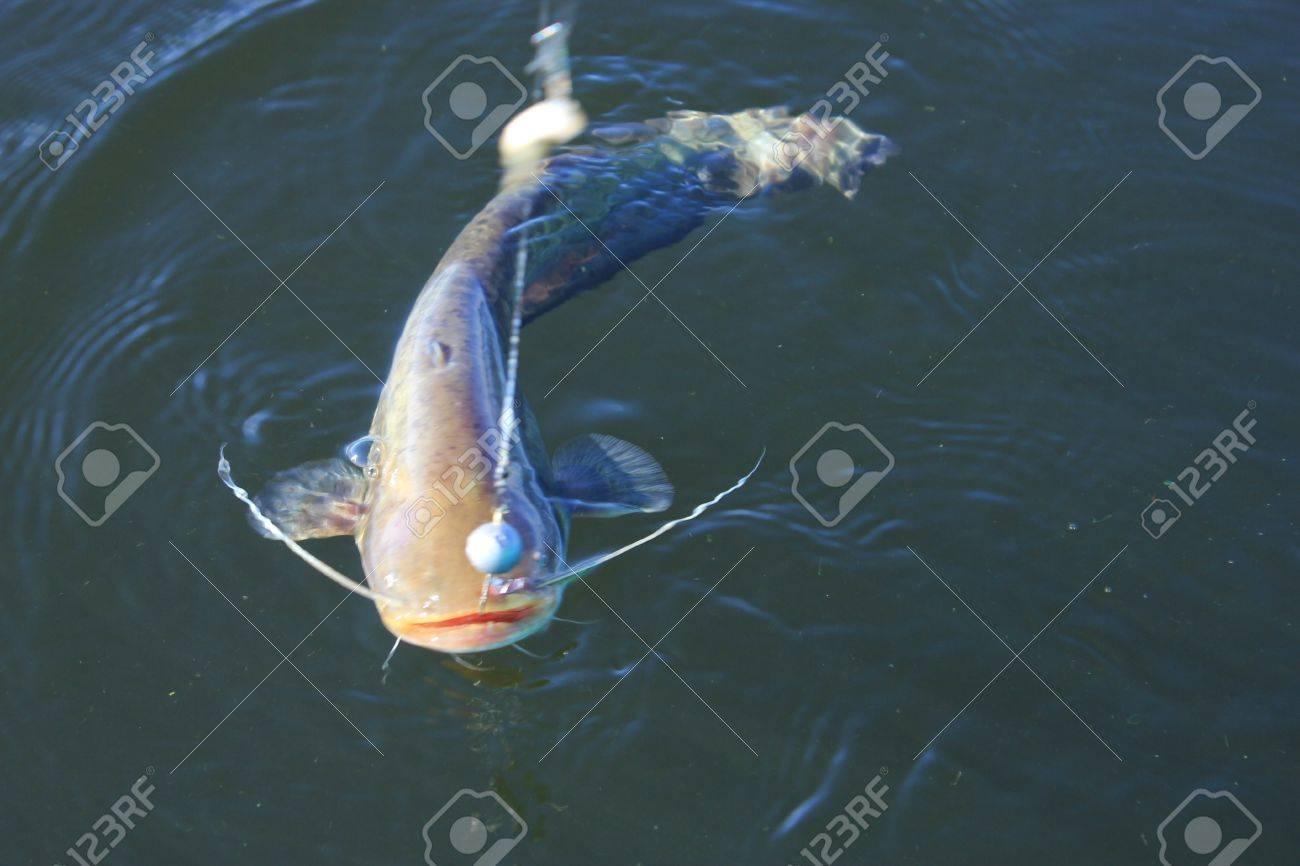 pez Bagre Foto de archivo - 10055337