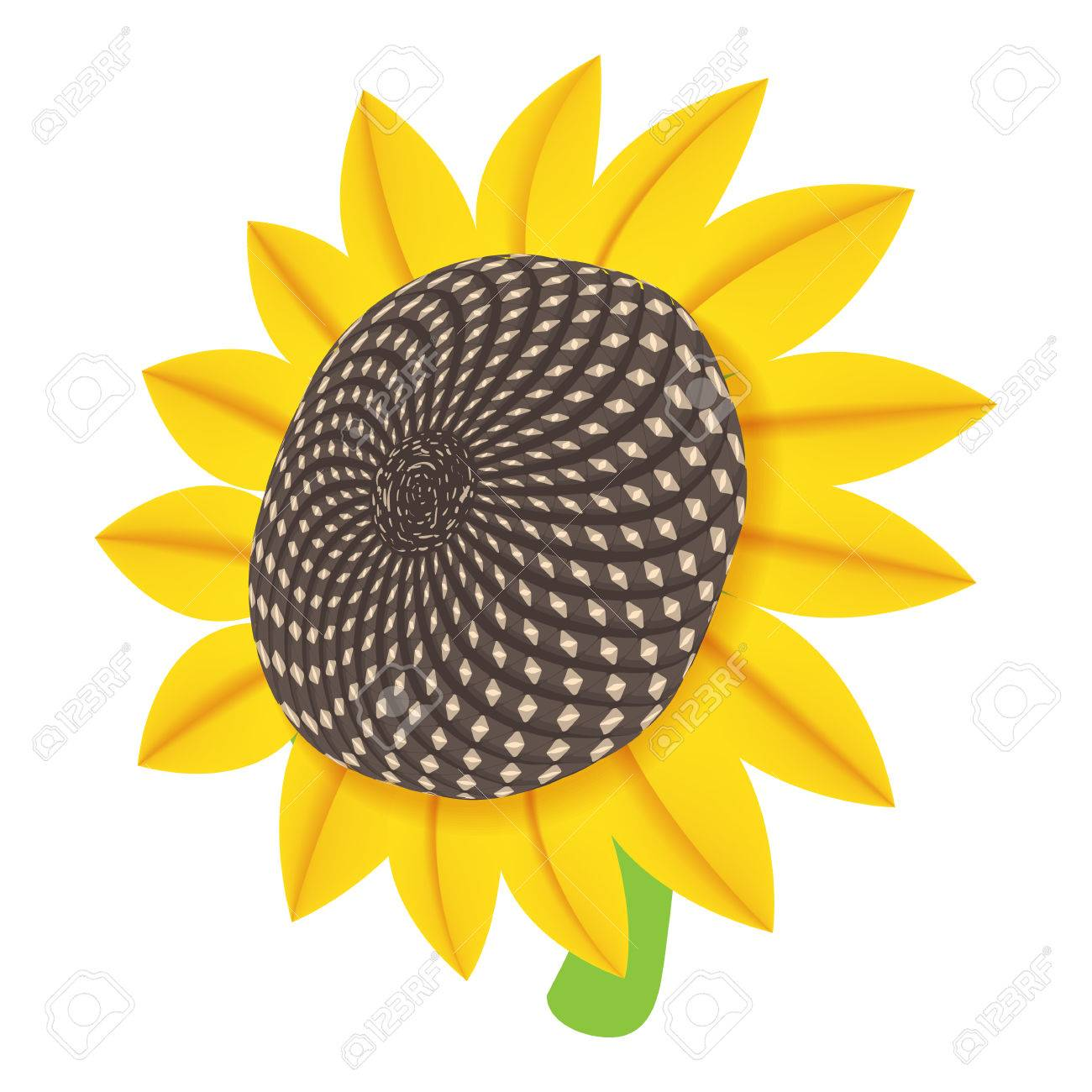 Sun Flower Icon In Cartoon Style Isolated On White Background
