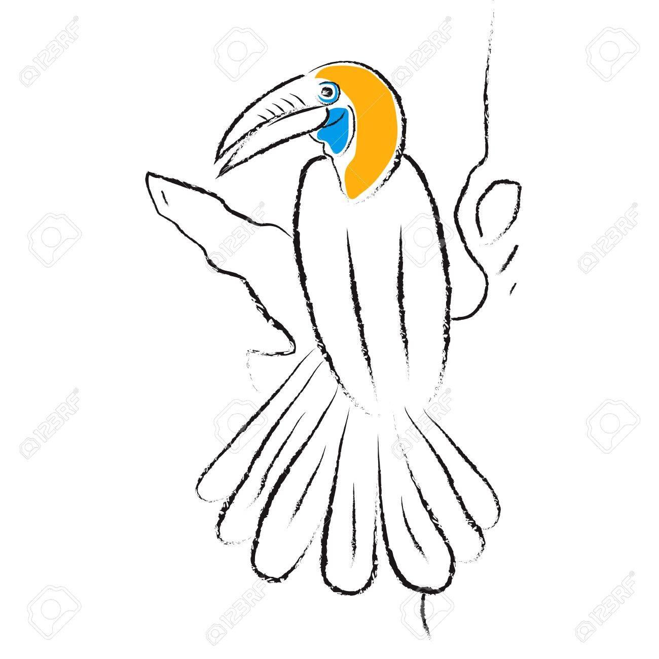 Hornbill Bird Images Bird Hornbill Stock Vector