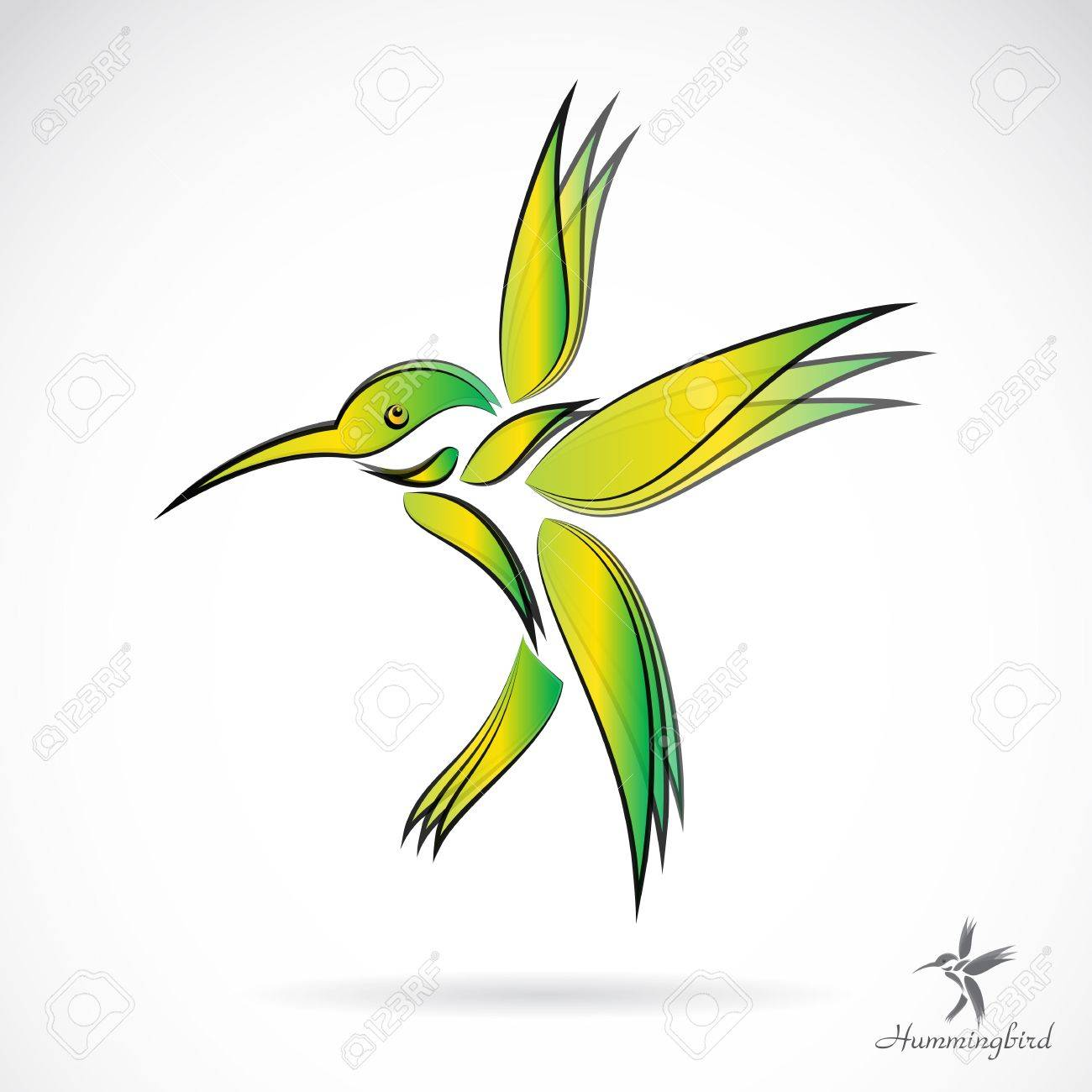 Vector image of an hummingbird on white background Stock Vector - 19028730