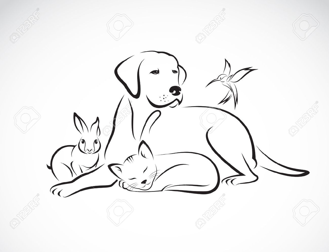 Vector group of pets - Dog, cat, bird, rabbit, isolated on white background - 38923992