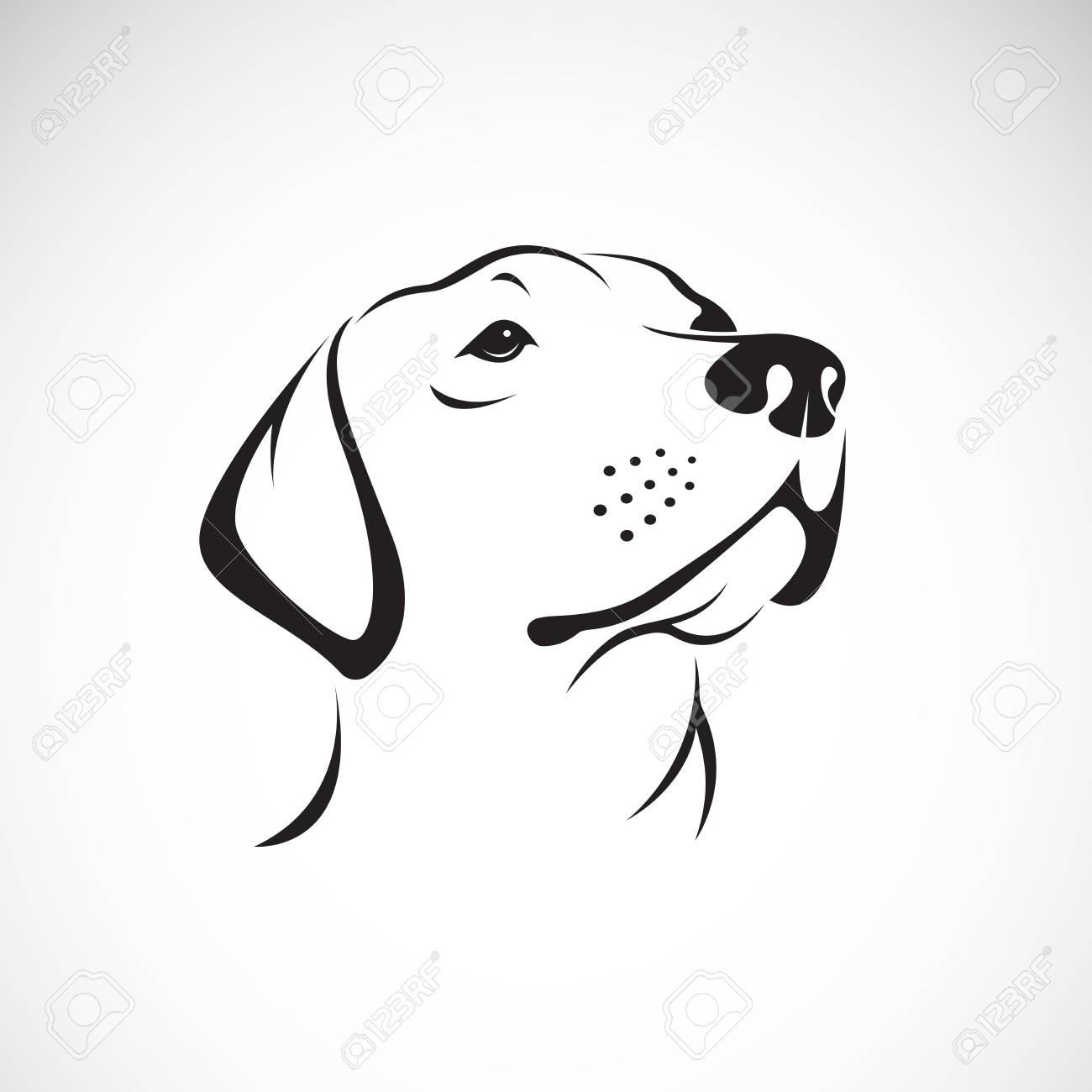 Vector of a dog head (Labrador Retriever) on white background - 91177129