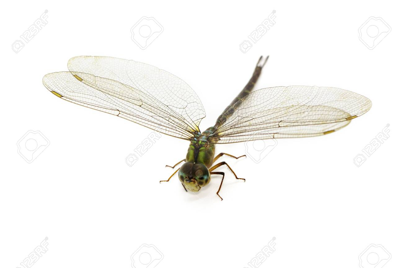 Image of dragonfly on a white - 123974845