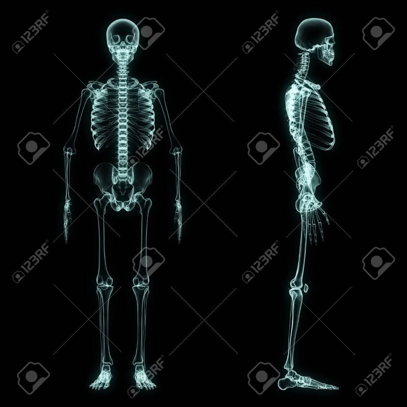 Ungewöhnlich Ganzkörper Anatomie Ideen - Anatomie Von Menschlichen ...
