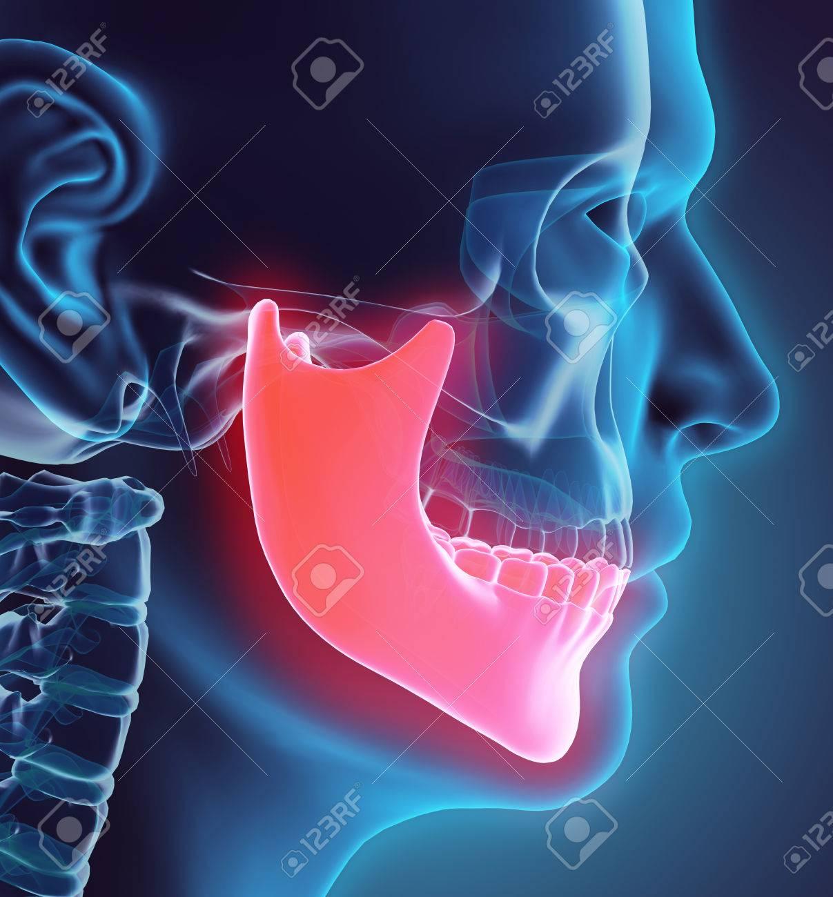 3D Illustration Of Mandible - Part Of Human Skeleton. Stock Photo ...