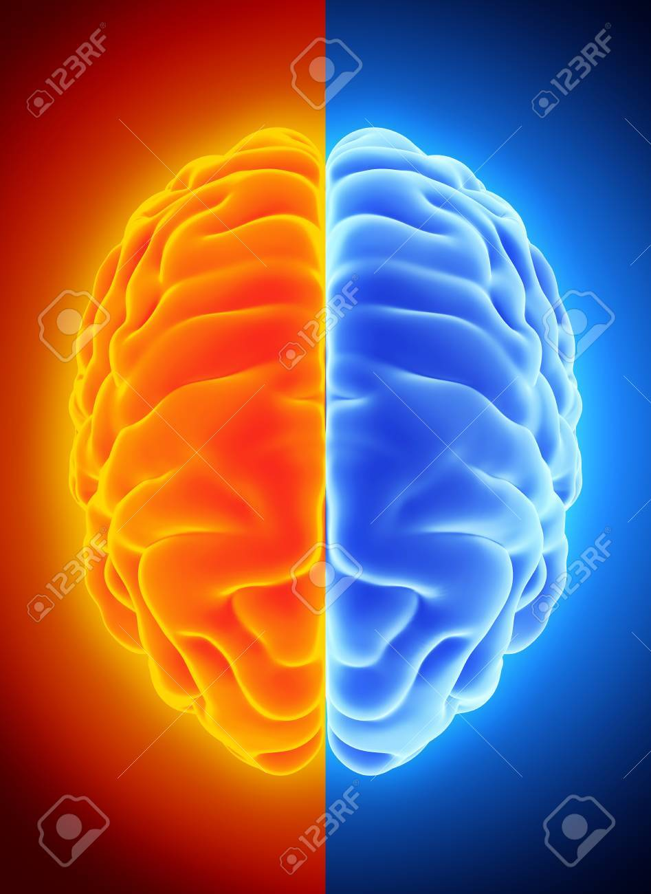 3D Illustration Of Bright Half Blue And Orange Brain, Anatomy ...