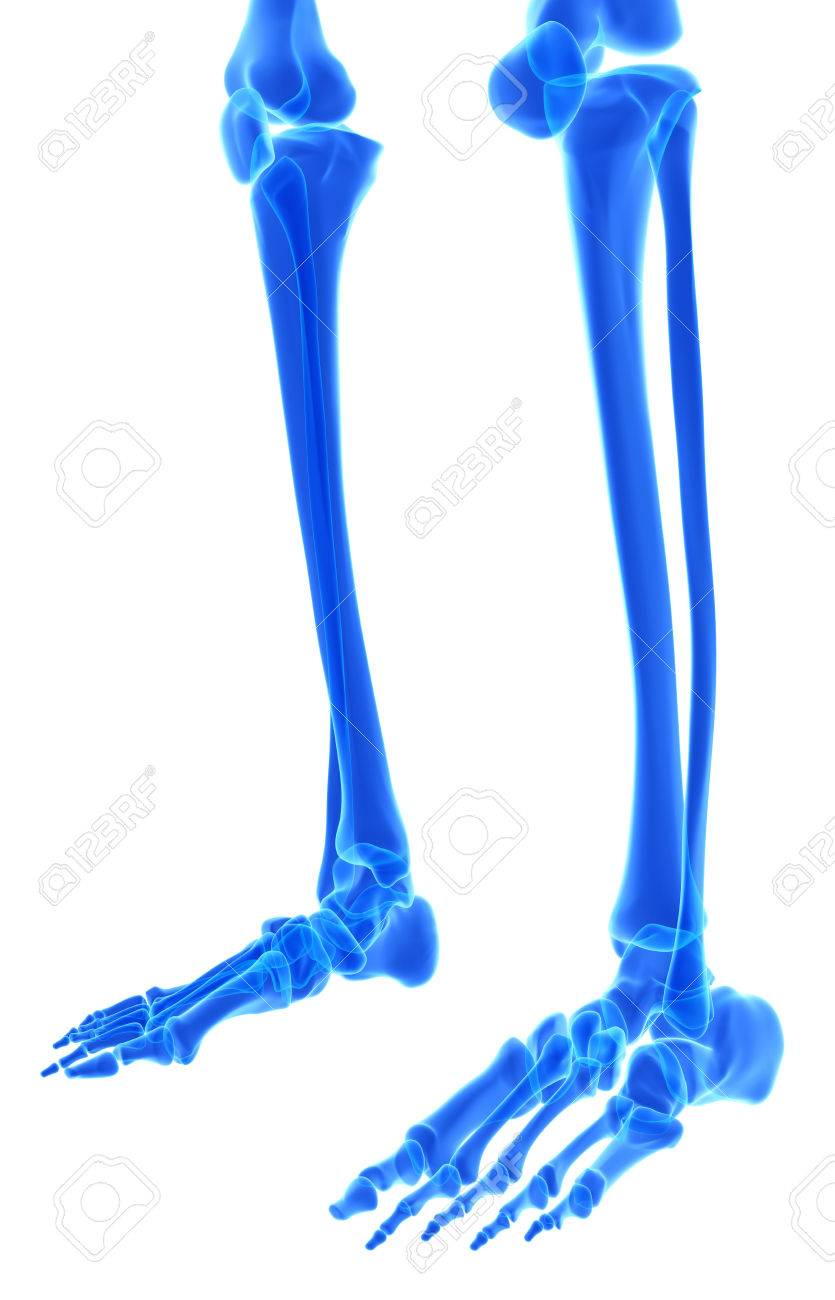 Ilustración 3D Del Esqueleto Pies - Parte Del Esqueleto Humano ...