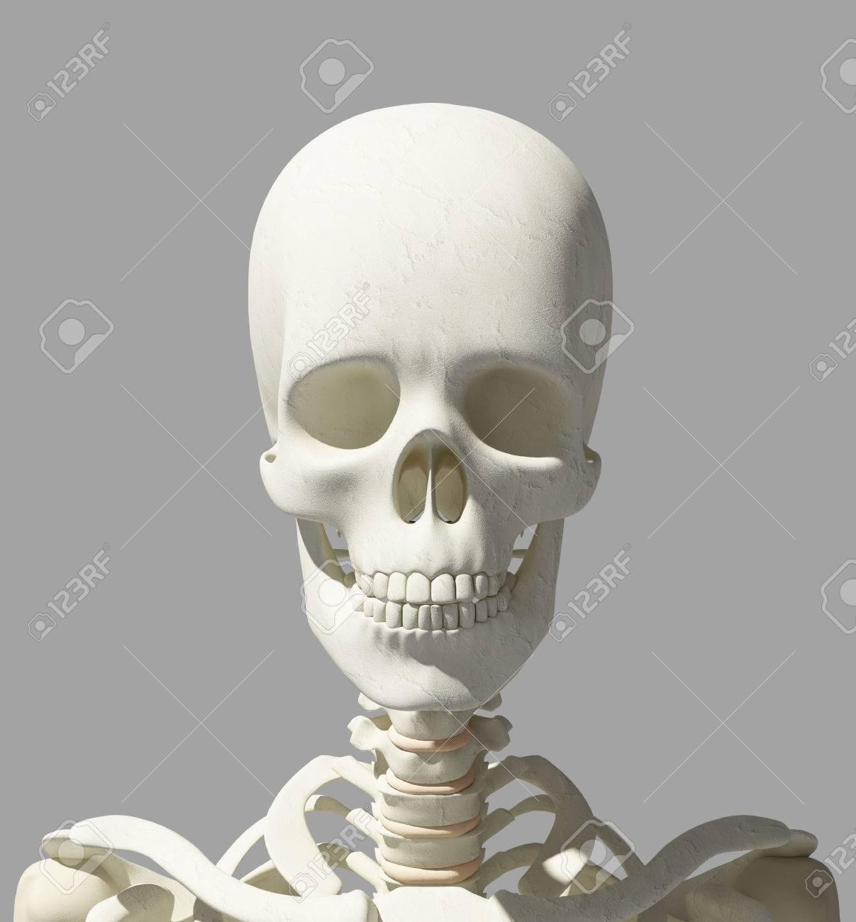 3D Illustration Of Skull Anatomy - Part Of Human Skeleton, Medical ...