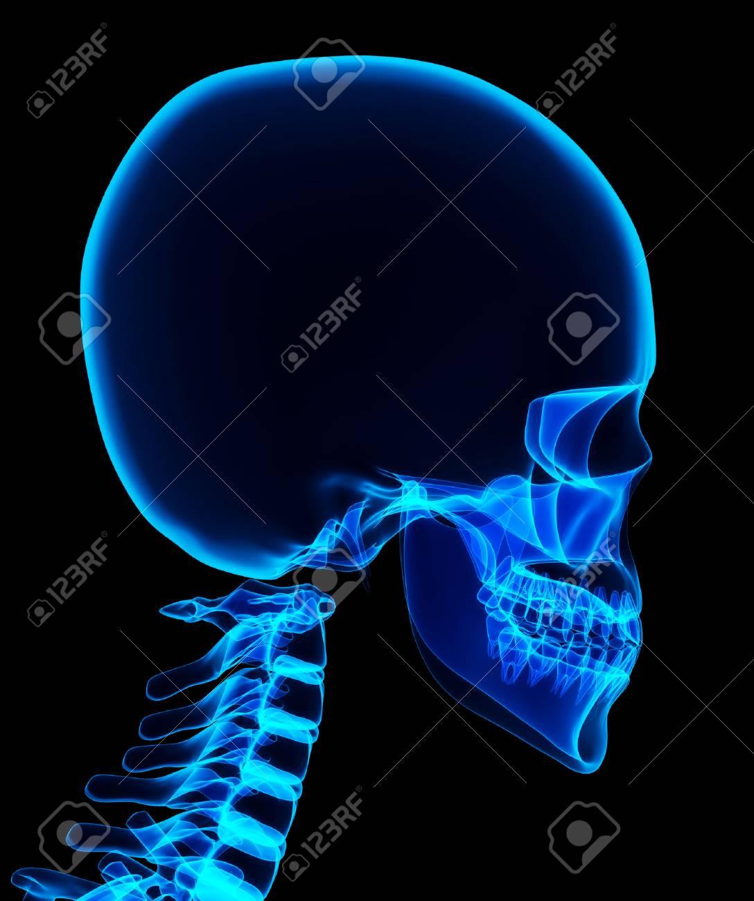 3D-Darstellung Von Glänzenden Blauen Skelett-System, Medizinische ...
