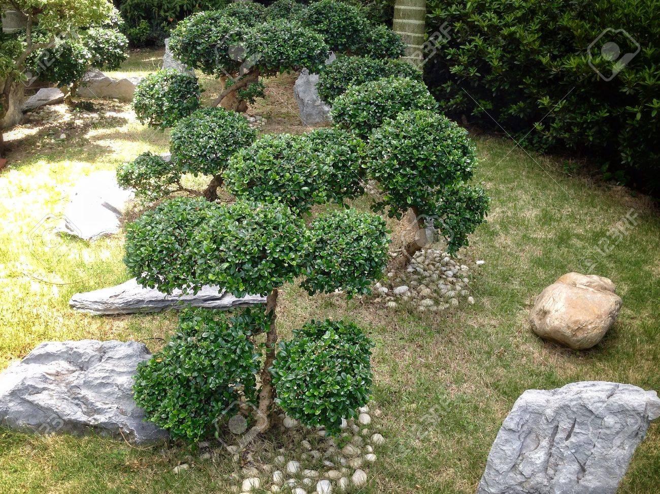 Un jardin de rocaille avec des bonsaïs.