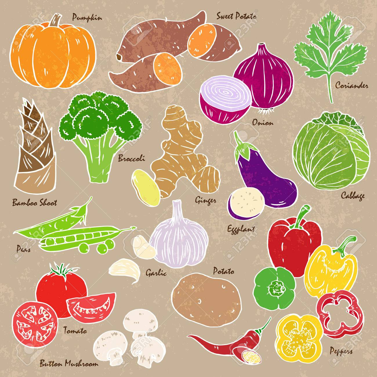 Collection of hand-drawn vegetables and spices. - 53523102