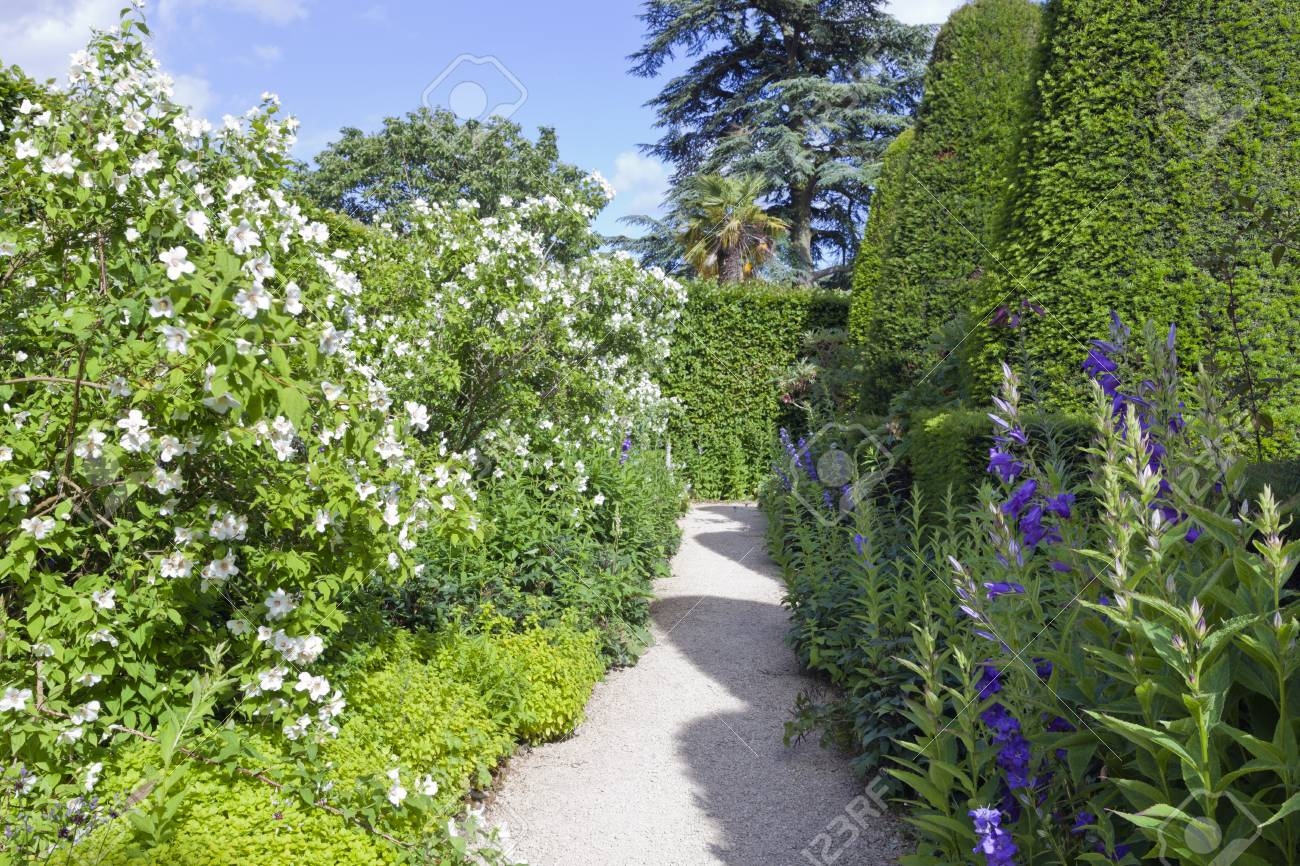 Garden Path Between Yew Topiary Trees And White Flowering Shrubs Stock Photo Picture And Royalty Free Image Image 111833229