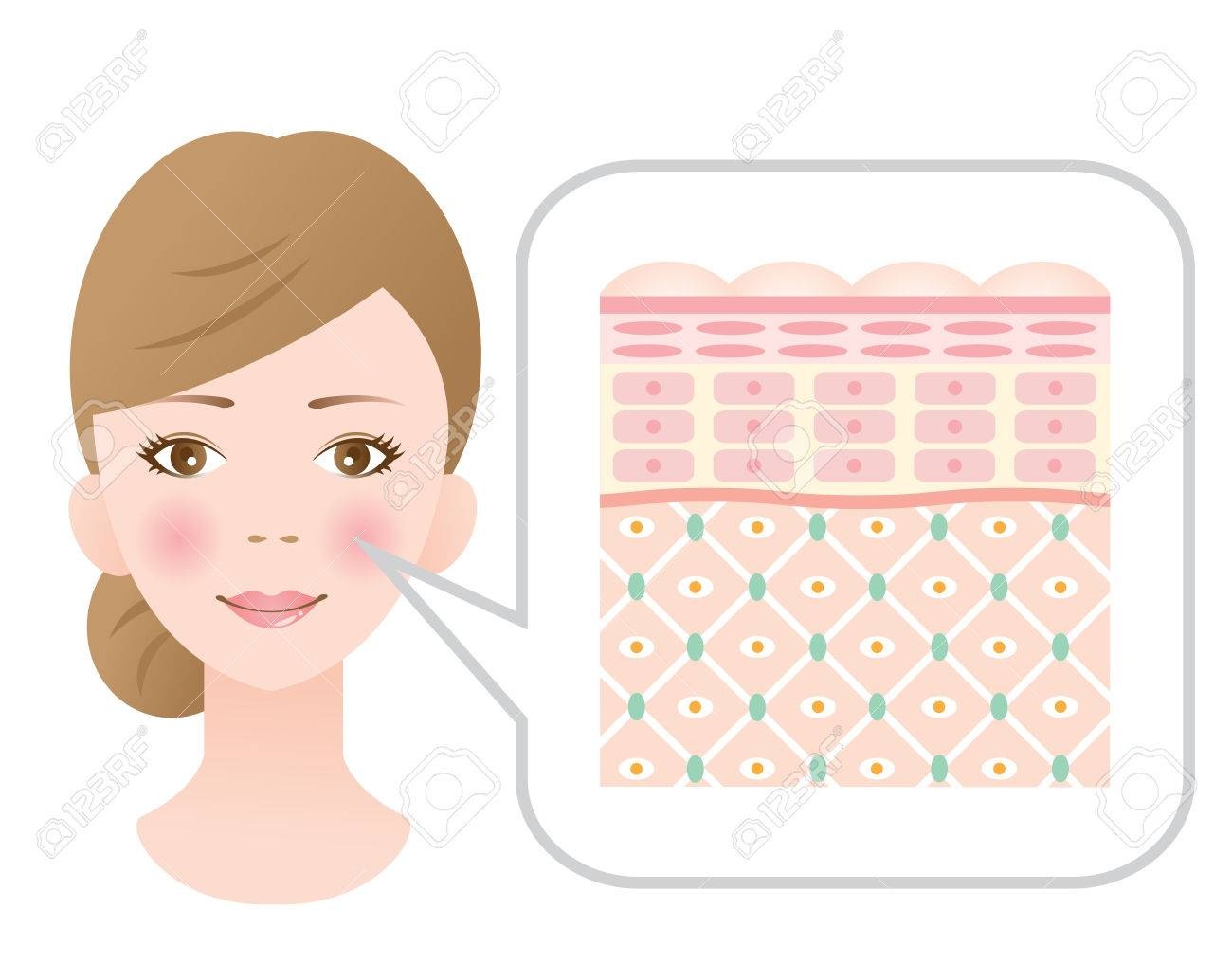 Diagram of young healthy skin showing the collagen framework is healthy. - 75454331