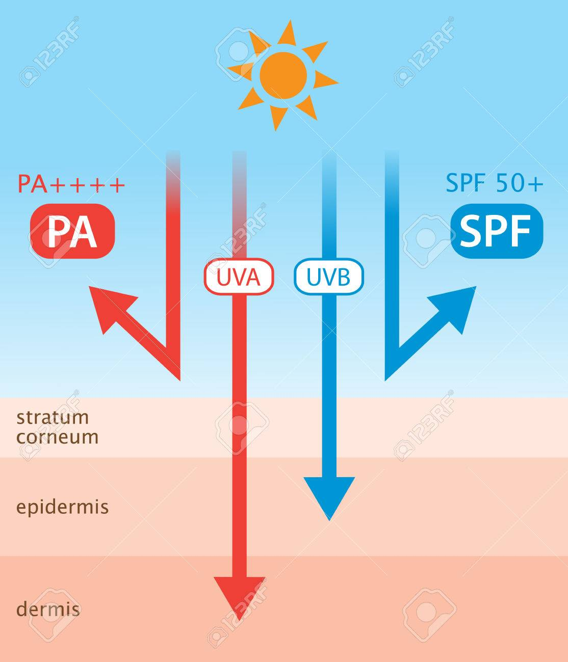 diagram of ultraviolet rays and sunscreen. SPF indicates UVB protection and PA indicates UVA protection - 83298207