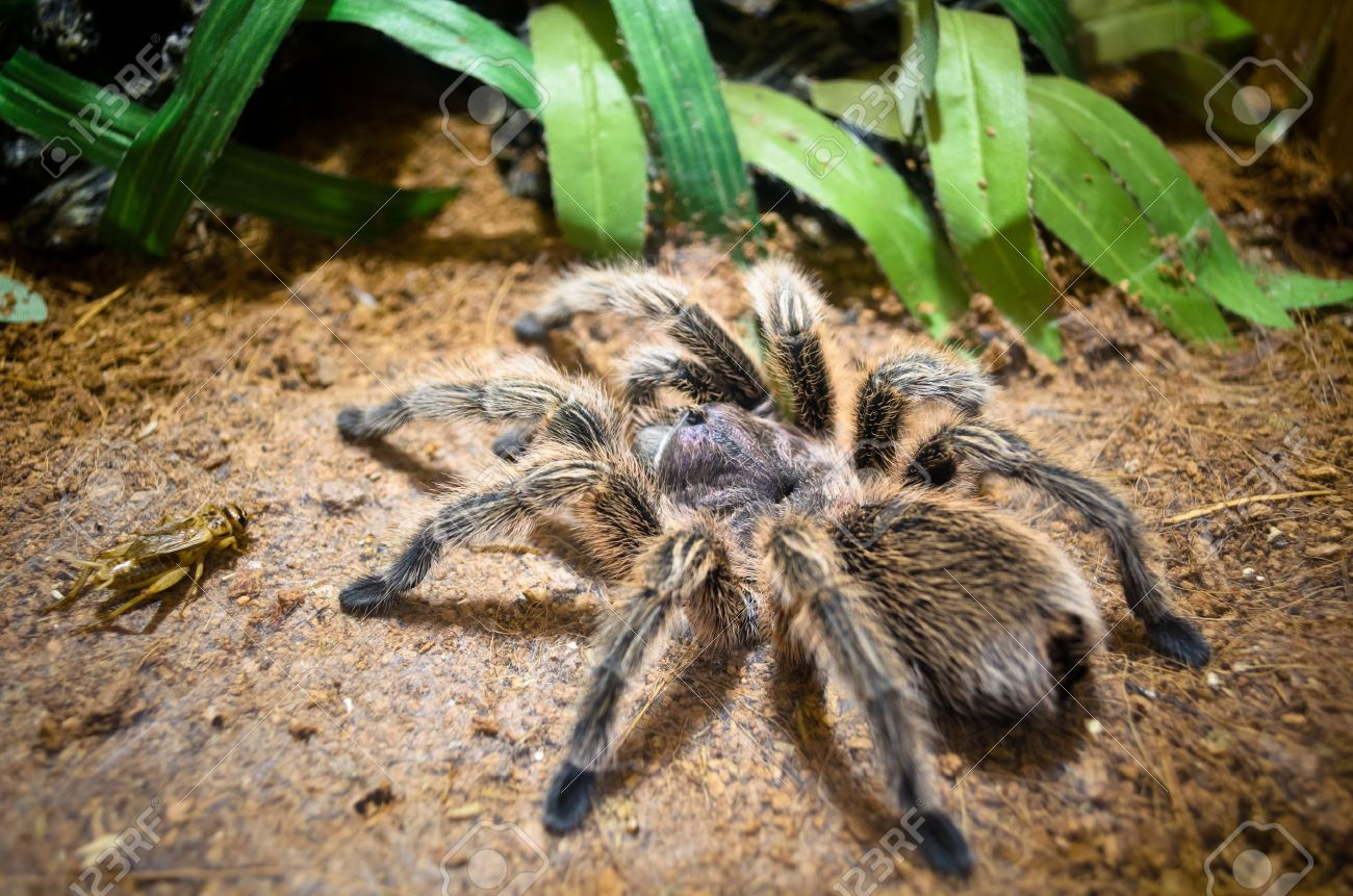 A poisonous spider  It was fixed capture prey Stock Photo - 14174303