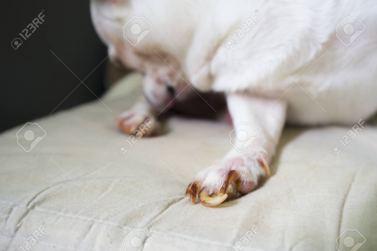 Long Dog Nails Stock Photo, Picture And Royalty Free Image. Image ...